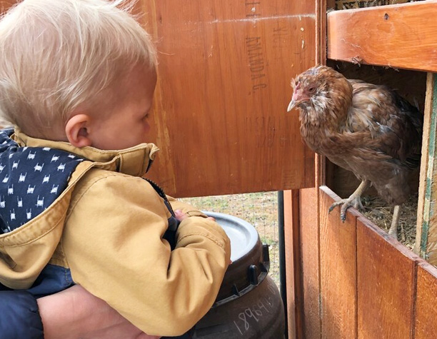 BJCC nBjorn & Chicken